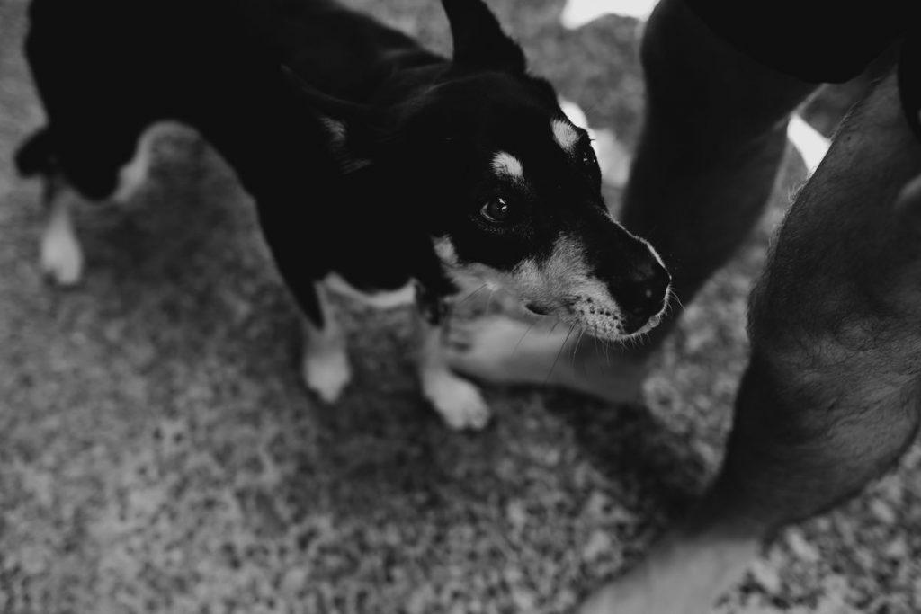 dog looking up at owner at Broome wedding