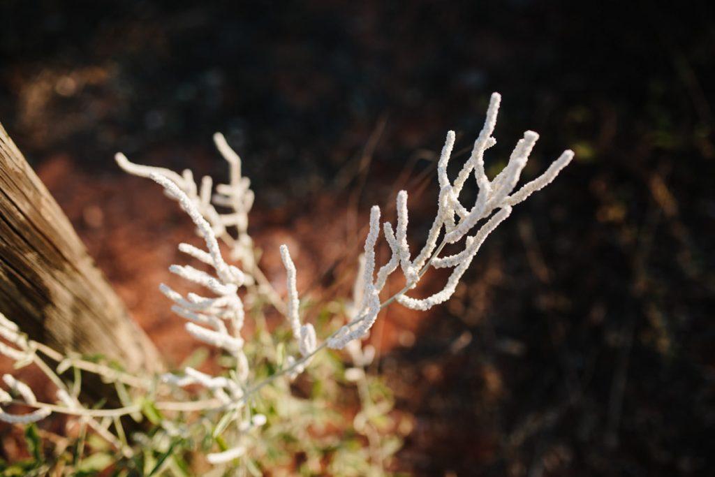 broome-photographer-caitlinjames-1