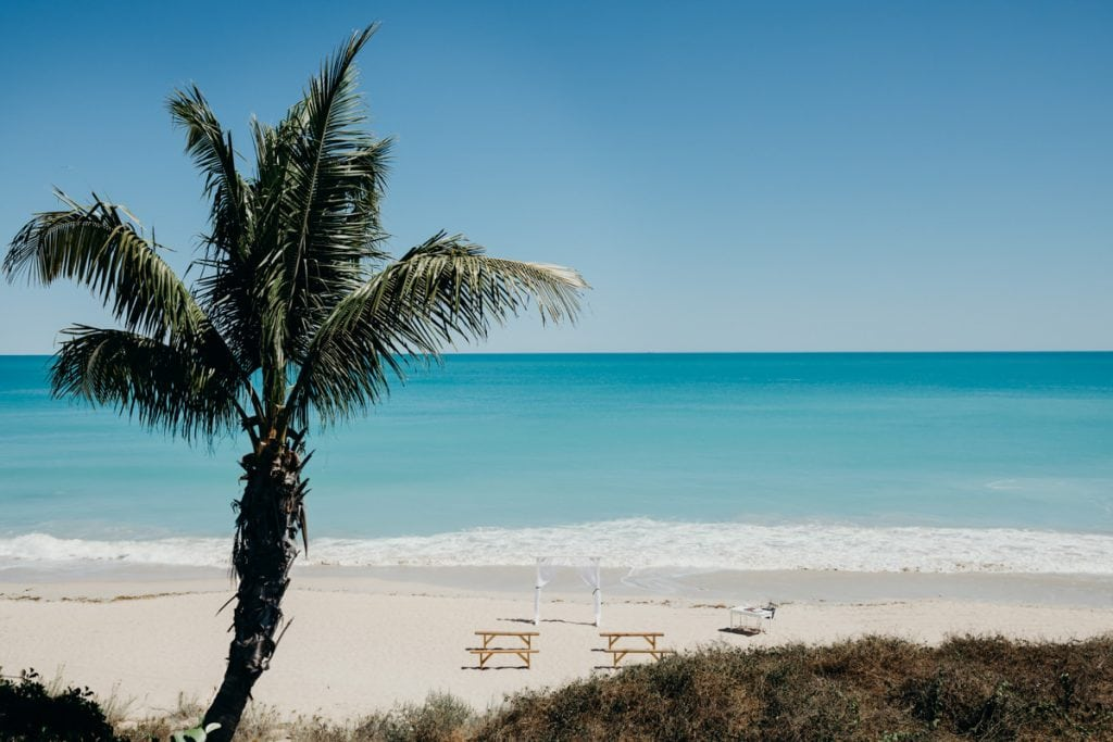 Cable Beach at high tide with palm tree