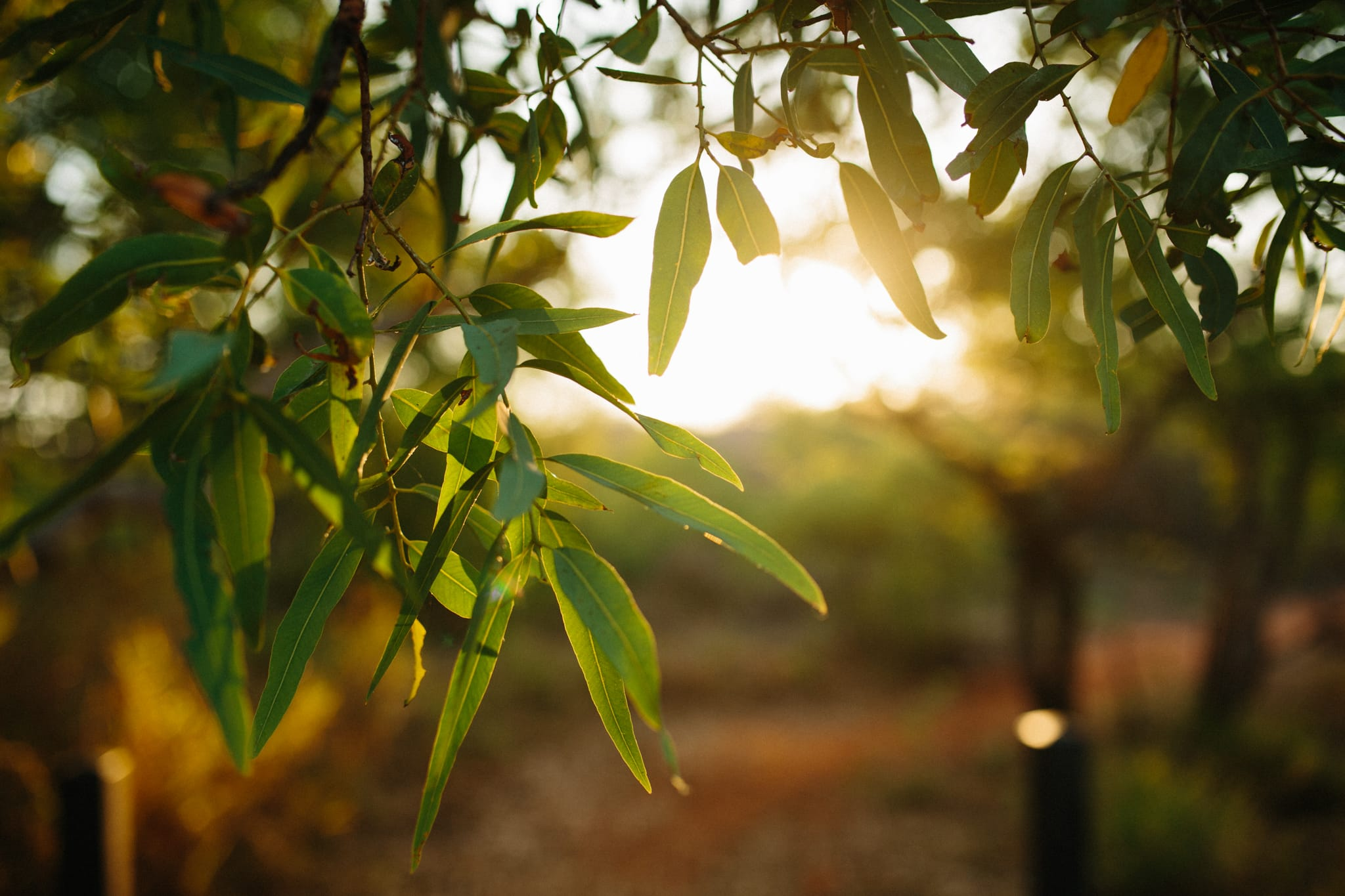 the sunlight is shining through the green leaves of a tree