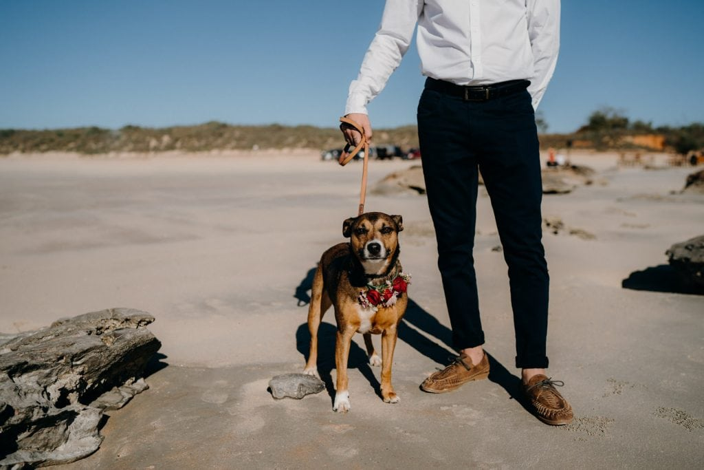 dog on lead wearing a flower crown at Cable Beach wedding