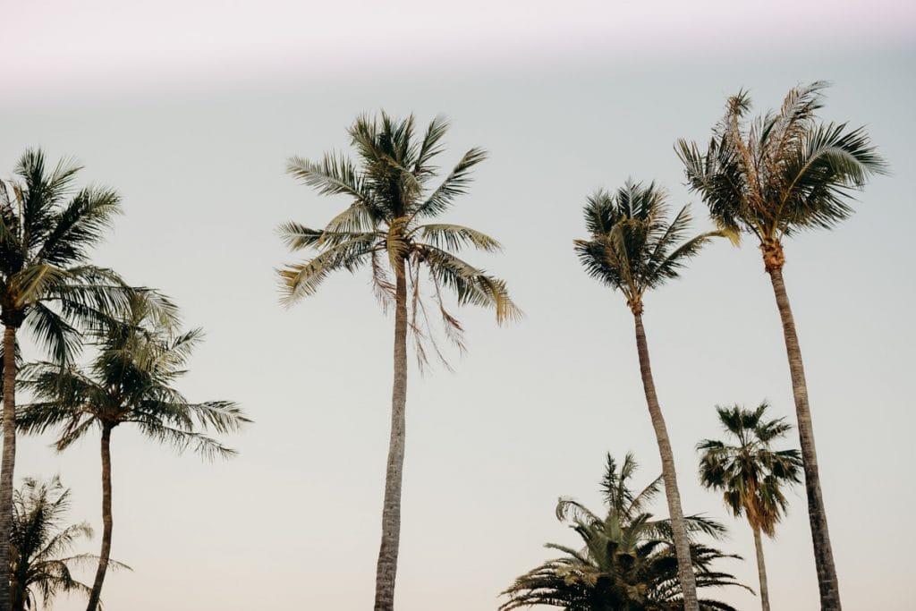 palm trees at Mangrove Hotel
