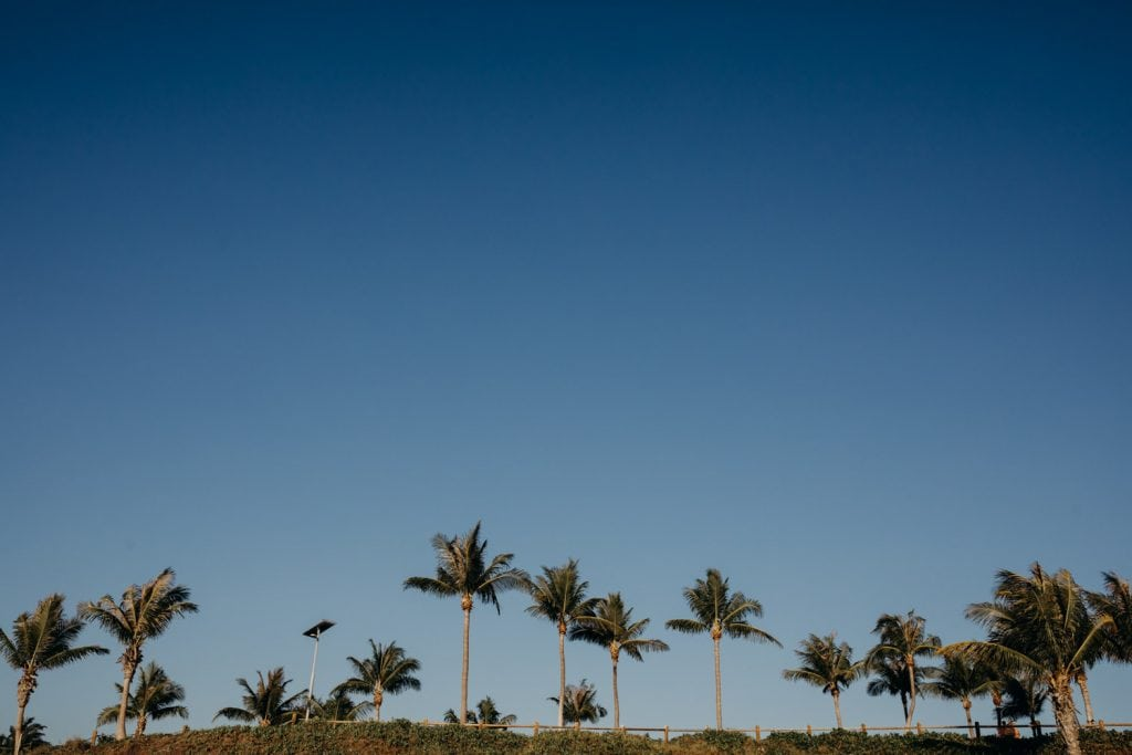 line of palm tress at Cable Beach in Broome Western Australia